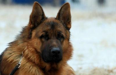 Питомник служебного собаководства