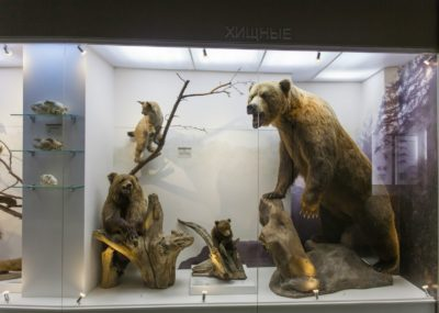 Краеведческий музей (отдел природы)